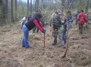 Sázení stromků